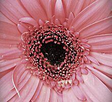 Sweet Sweet Daisy by TraceyKrick
