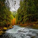 And The Light Came Through by Charles & Patricia   Harkins ~ Picture Oregon