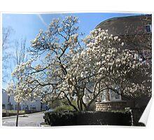 The magnolia tree Poster