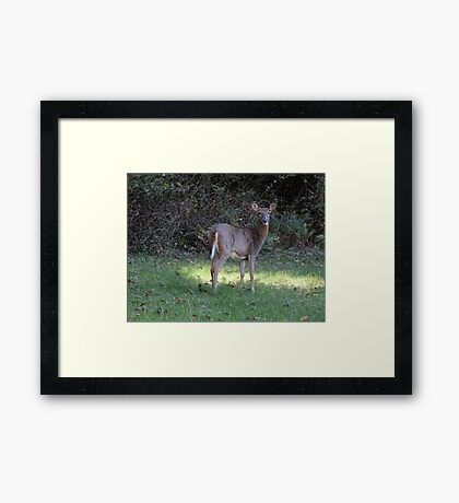 Backyard neighbor Framed Print