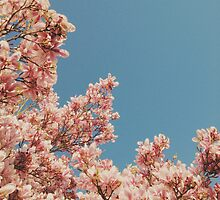 Pink Blossoms by Cassia Beck