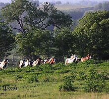 Gypsy Herd running uphill at Magic Gypsy Ranch by Linda Woods