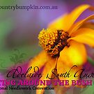 BATB 2012 - Golden Daisy by georgiegirl