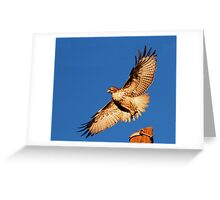 011811 Red Tailed Hawk Greeting Card