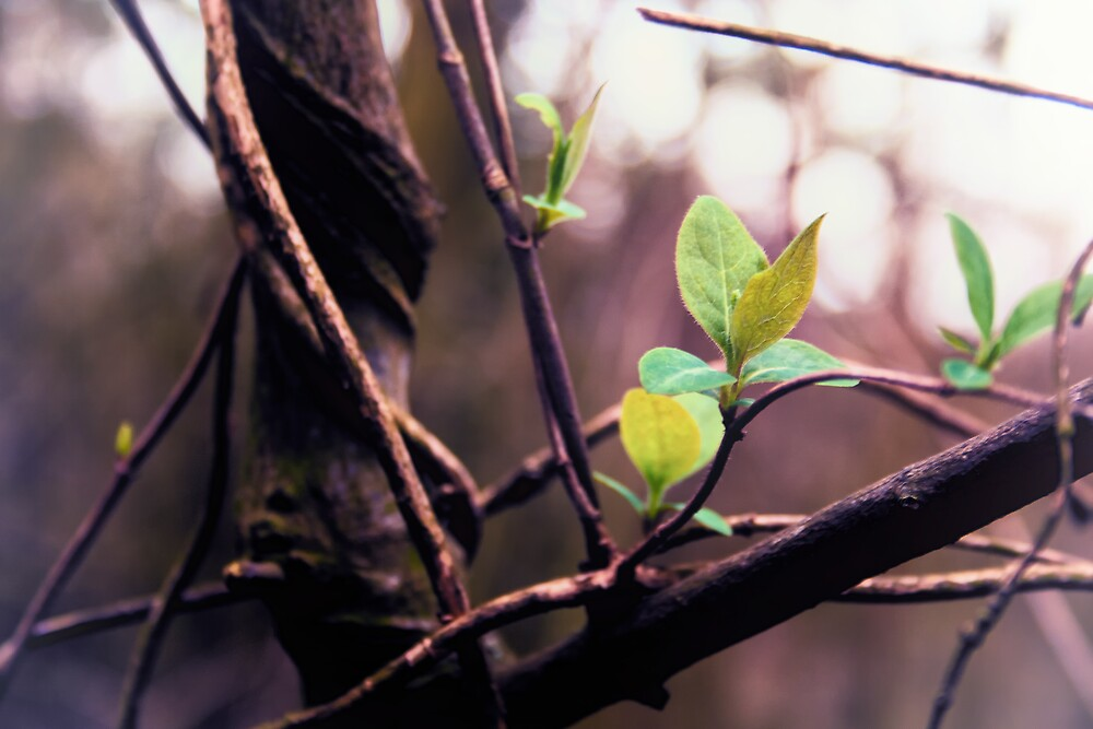 First leaves of Spring by Vicki Field