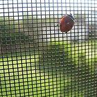 Ladybug  by dge357