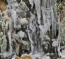 Spain, The Pyrenees Mountains ice droplets on a tree by PhotoStock-Isra