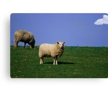 Sheep! Canvas Print