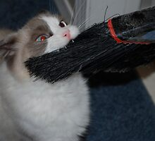 Give That Back...It's MY Broom!! by Carol Clifford