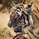 Tiger In The Sunshine   by Tangerine-Tane