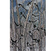 One for sorrow.... Photographic Print