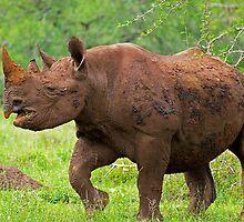 Big Mamma! by Explorations Africa Dan MacKenzie