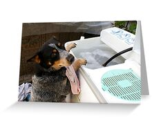 Really? You want me to wash ALL THOSE??? Greeting Card