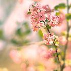 Pink forsythia blossom by Magdalena Warmuz-Dent