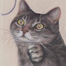Cat Game by Pam Humbargar