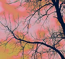Bubble gum sky by Robin Simmons