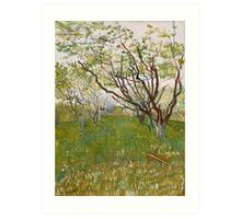 The Flowering Orchard (Cherry Tree) by Vincent van Gogh Art Print