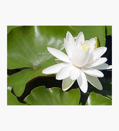 Wild Lily Photographic Print