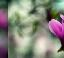 Tulip Tree Diptych 2 by alan shapiro