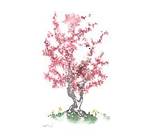 Little Zen Tree 562 Photographic Print