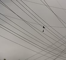 Hanging from Wired Skies by illPlanet