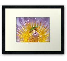 Frog on lily Framed Print