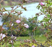 Wild Roses By An Irish Lake by Fara