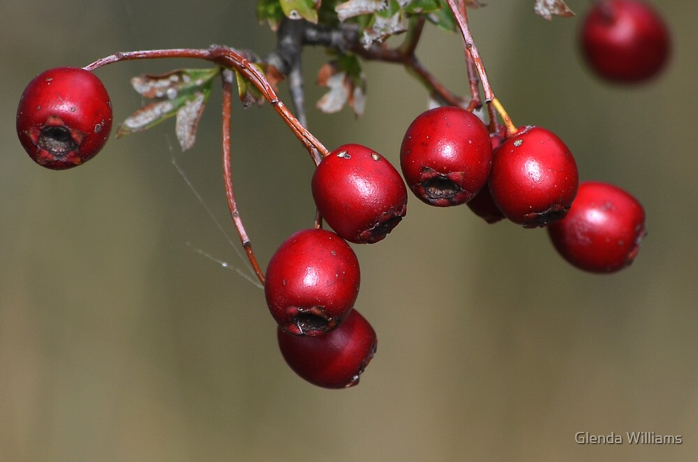 Autumn Berries by Glenda Williams