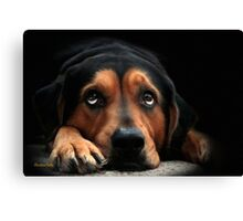 Puppy Dog Eyes Dog Art Canvas Print