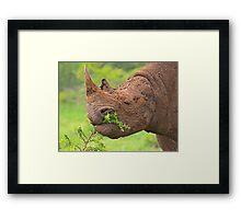 Black rhino - Imfolozi, South Africa Framed Print