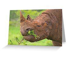 Black rhino - Imfolozi, South Africa Greeting Card