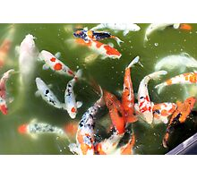One Fish, Two Fish... Photographic Print