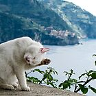 white cat licking by Anne Scantlebury