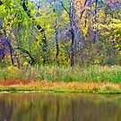 Lake Shore Autumn by ©  Paul W. Faust