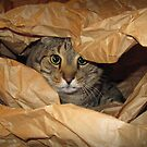 Cat + paper = wild animal! by Christina Brundage