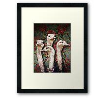 Upper Class Ostriches Framed Print