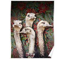 Upper Class Ostriches Poster