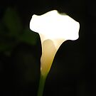 flare - arum lily by mellychan