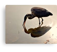 Great Blue Heron at Grover Cleveland Park, Essex Fells NJ - reflections1 Canvas Print