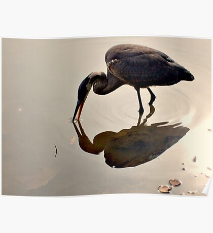 Great Blue Heron at Grover Cleveland Park, Essex Fells NJ - reflections1 Poster