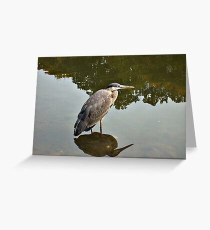 Great Blue Heron at Grover Cleveland Park, Essex Fells NJ - reflections2 Greeting Card