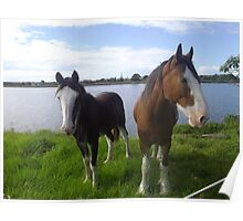 A Clydesdale with Offspring. Poster