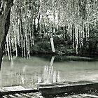 Water, Light, Willow by Jane Keats