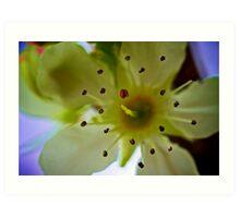 Macro Flower 4 Art Print