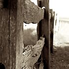 Fence Line 2 by D-GaP