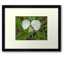 Wit veldblom Framed Print