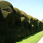 Wobbly Hedge  by lezvee