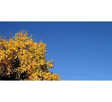 Yellow Autumn Tree Photographic Print