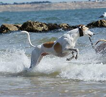 Wave Jumper by Sally J Hunter