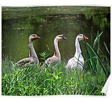 Three Geese Poster